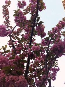 130415_arbre_819