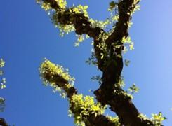 Petit_130414_arbre_804