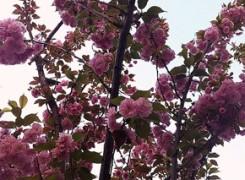 Petit_130415_arbre_819