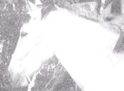 Petit_131102_cavall_926