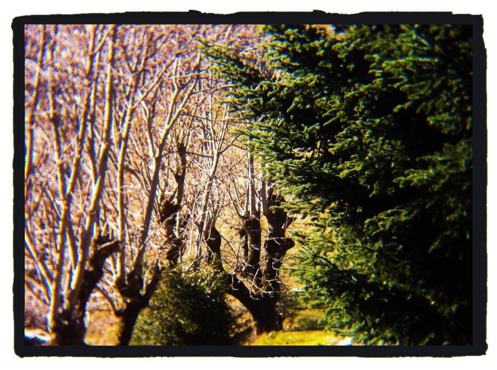 131207_arbres_137