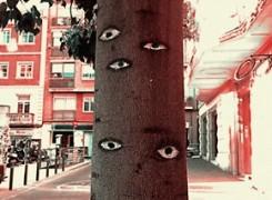 Petit_131128_ulls_arbres_108