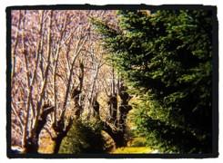 Petit_131207_arbres_137