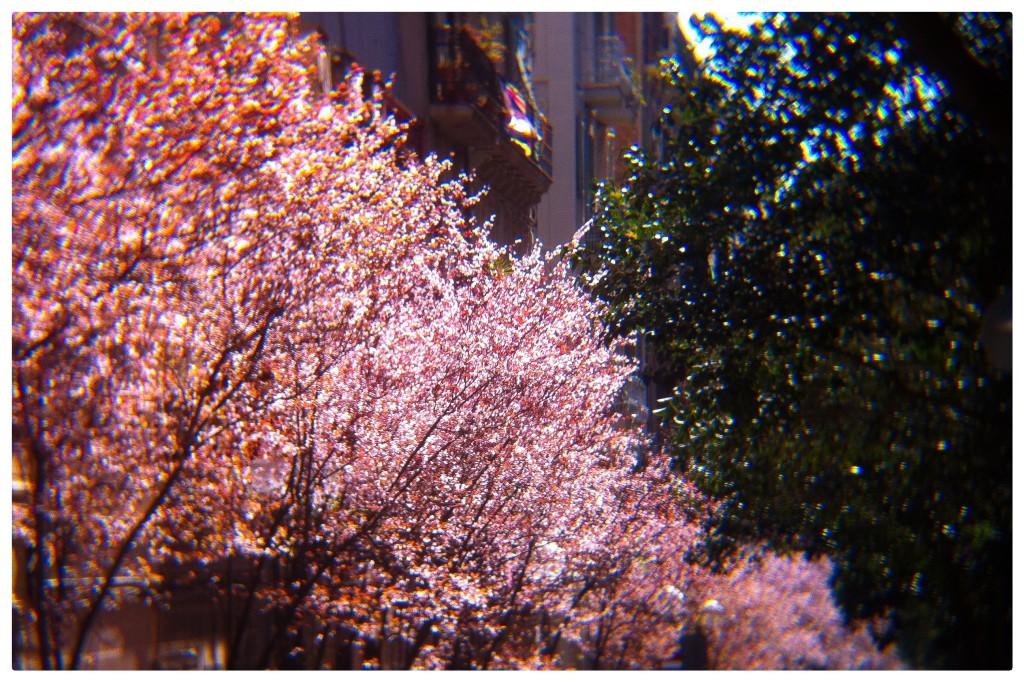 140307_arbres_762