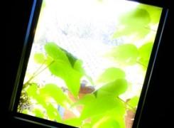 Petit_140425_finestra_155