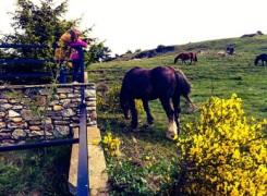Petit_140525_cavalls_425