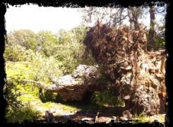 Petit_140630_arbre_029