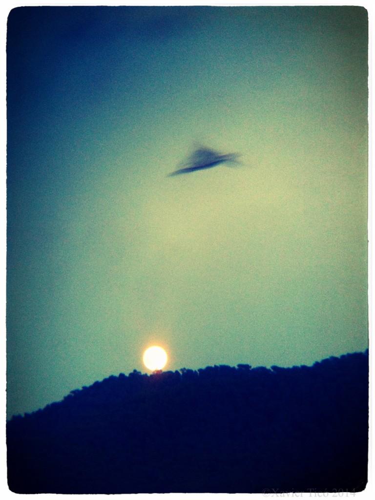 Ocell i lluna plena d'agost