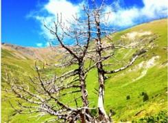 Petit_140806_arbre_mort_238