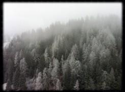 Petit_141207_arbres_nevats_202
