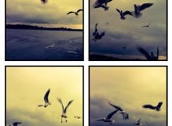 Petit_141208_gavines_llac_stanberg_250