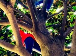 Petit_150614_magnolia_439