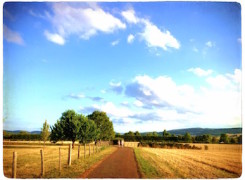Camí rural